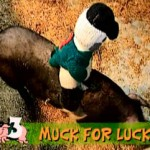 Pig Race Fundraising Ideas